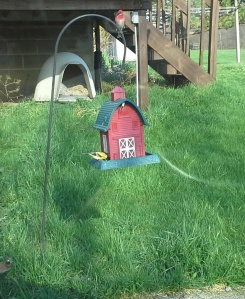 A gold finch and a purple finch at my feeder